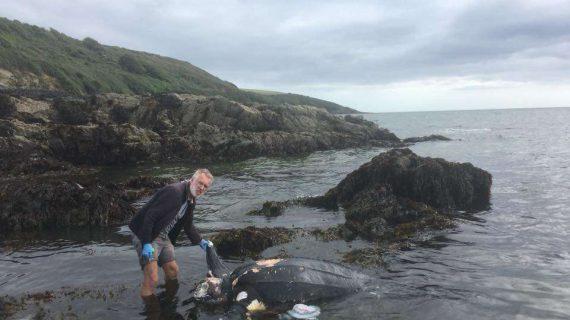 """Phát hiện xác """"cụ rùa"""" quý hiếm 100 tuổi trôi dạt vào bờ biển Anh"""