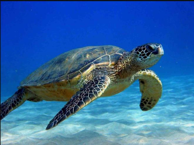 Tới thăm Côn Đảo – nơi bảo vệ nhiều rùa biển nhất Việt Nam