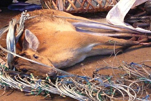 Tàn sát và buôn bán thú hoang: Nếu tôi là kiểm lâm hoặc cảnh sát môi trường… thì sao?