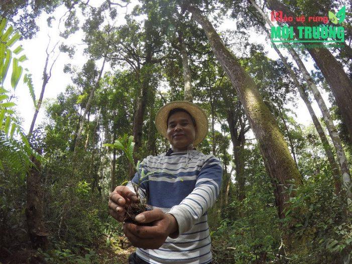 Hướng đi nào cho ngành Lâm nghiệp nước ta: Cải thiện sinh kế người dân nhờ rừng (Kỳ 1)