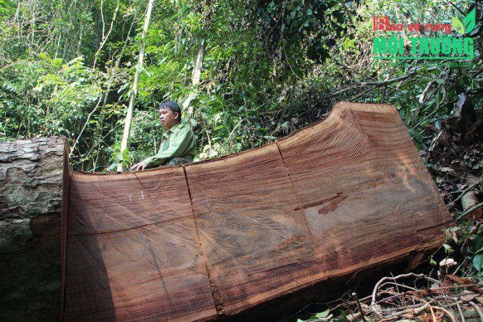 Bảo vệ rừng gặp khó nếu kiểm lâm không trực thuộc quản lý của VQG, KBT