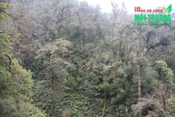 Hướng đi nào cho ngành Lâm nghiệp nước ta: Cơ hội phát triển kinh tế bền vững từ rừng tự nhiên (Kỳ 4)