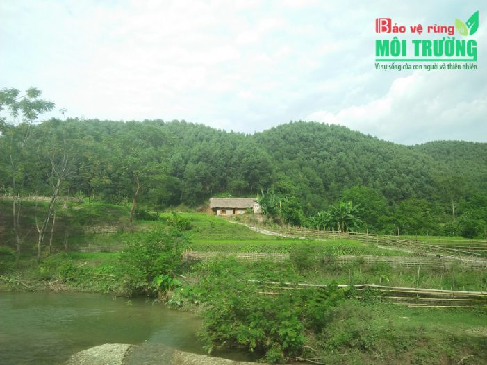 Hướng đi nào cho ngành Lâm nghiệp nước ta:Gỗ rừng trồng sẽ thay thế gỗ rừng tự nhiên (Kỳ cuối)