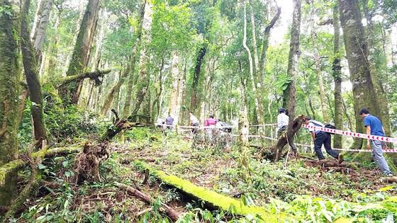 Cho thuê rừng để giữ rừng