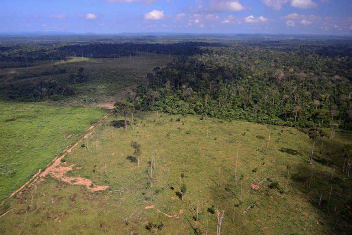 Giải cứu rừng nhiệt đới: Liệu chỉ rót tiền là đủ?