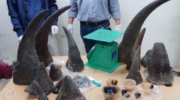 Phát hiện 32 kg sừng tê giác về Việt Nam qua đường hàng không