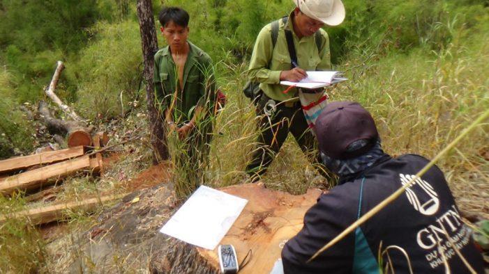 Đắk Lắk: Cưa gỗ quý vườn quốc gia, 15 thanh niên bị truy tố