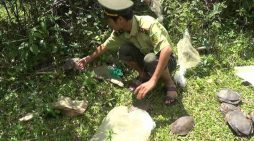 Rùa đất và cầy hương suýt lên bàn nhậu được thả về tự nhiên