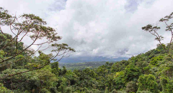 Hạn chế sự nóng lên toàn cầu: Đừng kỳ vọng vào công nghệ, hãy tập trung quản lý đất và bảo tồn rừng