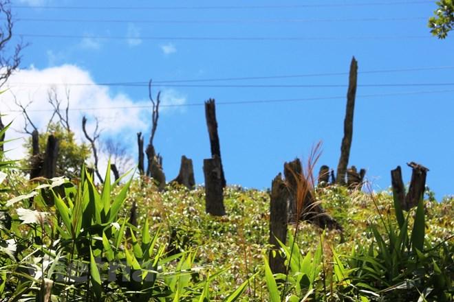Quản lý đất nông lâm trường chủ yếu là khoán trắng, phát canh thu tô
