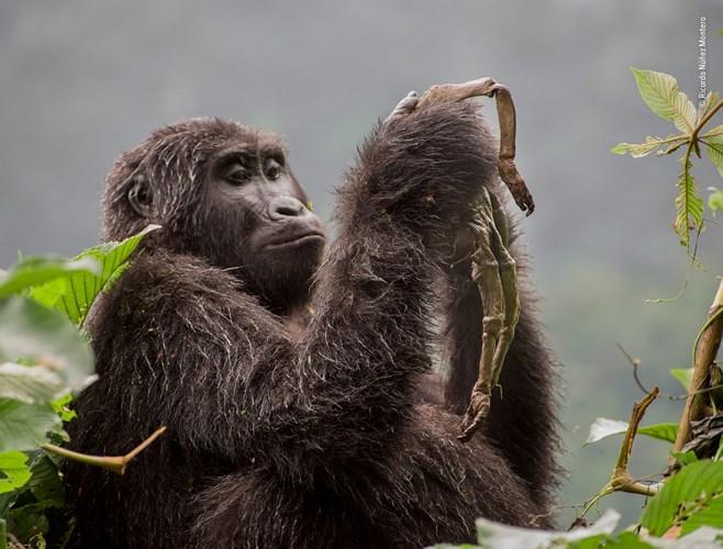 Tập huấn báo chí điều tra và bảo vệ động vật hoang dã