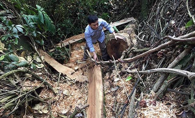 Cần có giải pháp giúp dân khi đóng cửa rừng tự nhiên tại Lai Châu