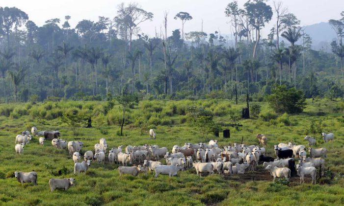 Kiểm soát tiêu thụ thịt, sữa giúp giảm phát thải khí nhà kính trong nông nghiệp