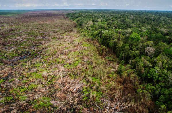 Diện tích rừng bị thu hẹp đáng kể vì sản xuất nông nghiệp