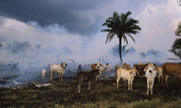 Con người đã hủy diệt thế giới động vật như thế nào?