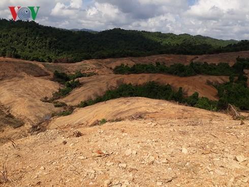 Dân ở Quảng Trị lấn chiếm đất rừng, chính quyền bó tay