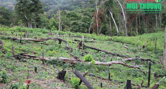 Quản lý, bảo vệ rừng cấp cơ sở: Nơi bị phá trắng, nơi tích cực giữ gìn