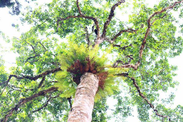 Đưa rừng hòa nhập dòng thác cách mạng công nghiệp lần 4