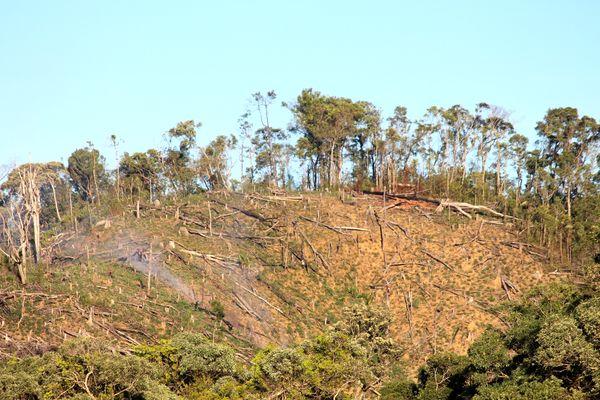 Giao khoán rừng và những hiệu quả ngược