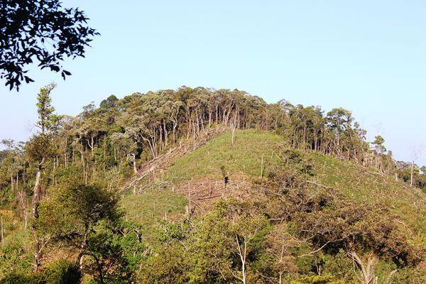 Mất rừng: Rối từ cơ chế rối đi