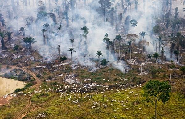 Hãy cứu lấy thiên nhiên Việt Nam!