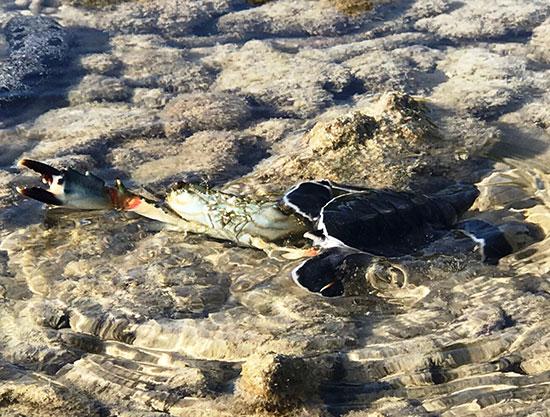 """Hành trình rùa biển – Bài 1: Những """"công dân"""" tự do"""