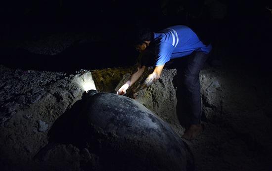 Hành trình rùa biển – Bài 2 : Đỡ đẻ cho… rùa