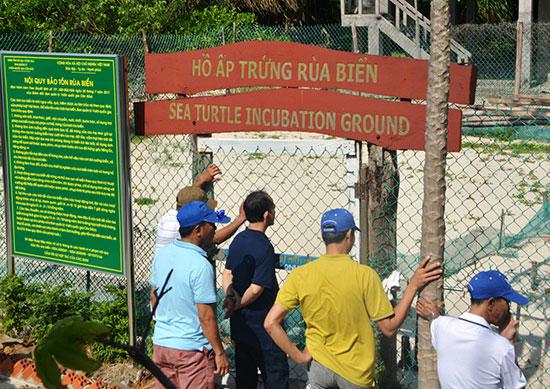 Hành trình rùa biển – Bài 3: Từ Côn Đảo nghĩ về Cù Lao Chàm