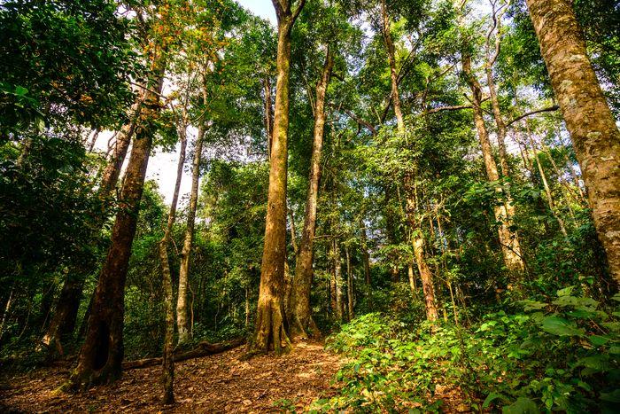 Hướng dẫn thi hành Luật lâm nghiệp: Cơ hội và thách thức trong bảo vệ rừng và quyền lợi người dân