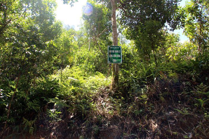 Chính sách hỗ trợ cộng đồng quản lý, bảo vệ rừng: Một vài nhận xét và khuyến nghị
