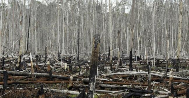 Pháp lên kế hoạch ngừng nhập khẩu các sản phẩm có nguyên liệu từ nạn phá rừng