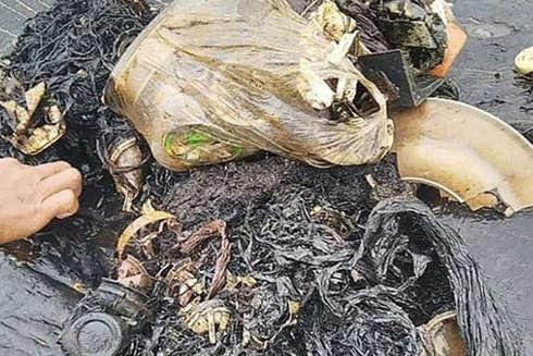 Indonesia phát hiện xác cá voi với 6 kg nhựa trong dạ dày