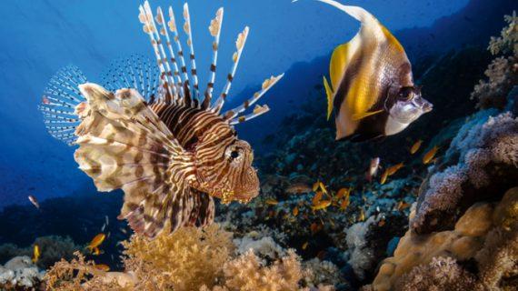 Những bức ảnh tuyệt đẹp về động vật dưới lòng đại dương xanh