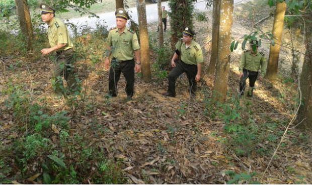 Hơn 3 triệu ha rừng được hưởng tiền dịch vụ môi trường rừng