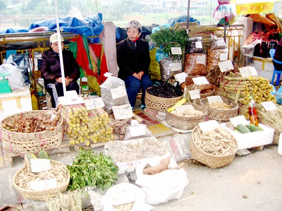 """Bảo tồn và phát huy giá trị cây thuốc Việt – Bài 1: """"Vàng xanh"""" đang cạn kiệt"""