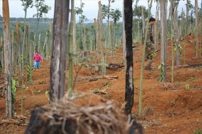 Cách chức Phó Chủ tịch huyện xí phần đất rừng