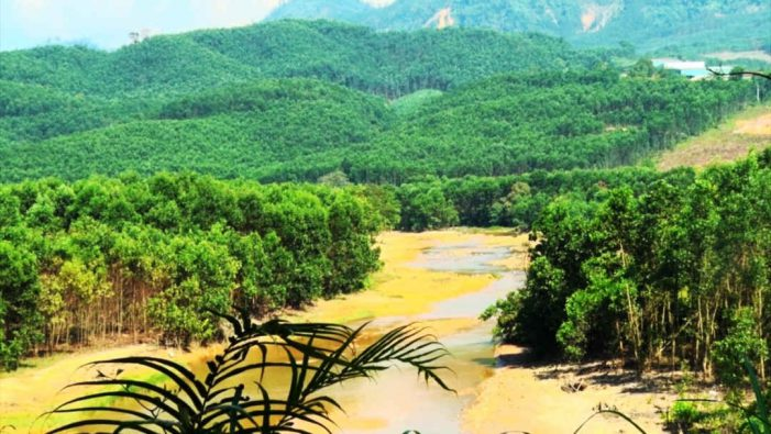 Quảng Nam: Gần 600 tỷ đồng hỗ trợ trồng rừng gỗ lớn