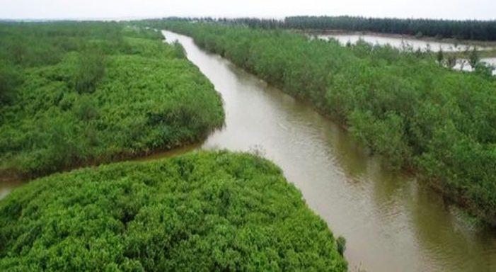 Thái Bình: Thành lập Khu Bảo tồn đất ngập nước huyện Thái Thụy