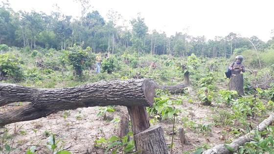 Bức xúc rừng bị phá, dân viết đơn phản ánh lên tỉnh