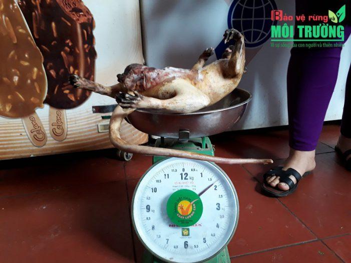 Mùa diệt muông thú ở Gia Lai (Kỳ 1): Săn thú trong nhà hàng