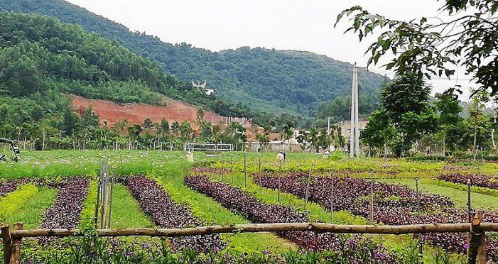Di dời dân, chuyển đất rừng để xây dựng sân golf Mường Thanh