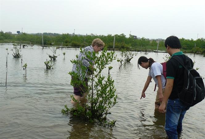 Điều chỉnh giảm trồng rừng ngập mặn