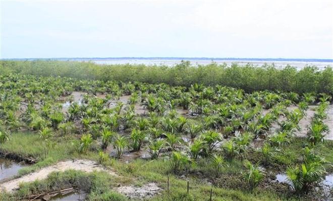 Tăng khả năng chống chịu biến đổi khí hậu cho các cộng đồng ven biển
