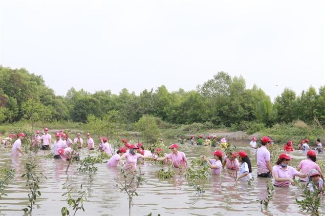 C.P Việt Nam tham gia trồng rừng ngập mặn ở Cần Giờ