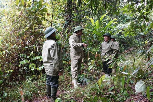 235.000 ha rừng được cấp chứng chỉ quản lý rừng bền vững