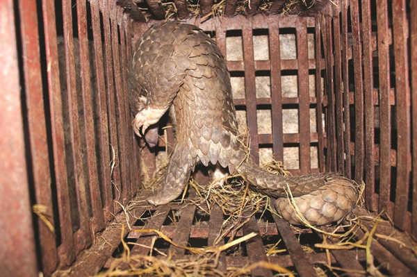 Động vật hoang dã cạn kiệt và tận diệt