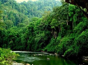 Bãi bỏ 44 thủ tục hành chính về bảo vệ và phát triển rừng