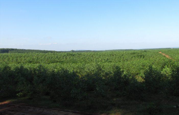 Quảng Trị: Ban hành kế hoạch hành động về giảm phát thải khí nhà kính