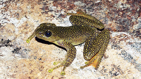 Lào Cai tăng cường bảo vệ động vật hoang dã trên địa bàn