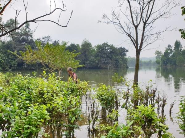 Hà Tĩnh: Nâng đập thuỷ lợi Khe Lau, 24 hộ dân ngập trong nước